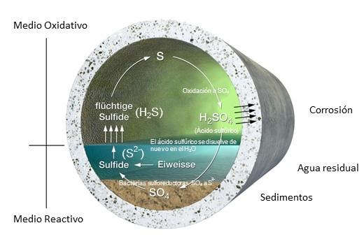 Resultados, balance de sulfuros para la eliminación de olores y corrosión en las redes de saneamiento, sewervac