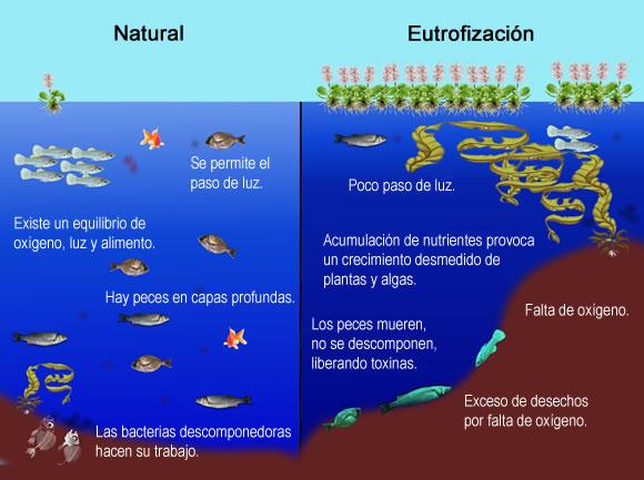 Oxigenación de aguas